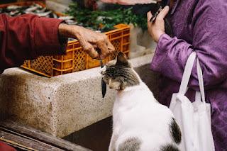 Cara Membuat Makanan Kucing Kampung Sendiri