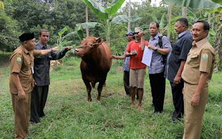 Berkurban di Aceh, Jokowi Beli Satu Ekor Sapi Rp55,8 Juta