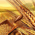 Μανώλης Κεφαλογιάννης: «Προκλητική αδιαφορία του Υπουργείου Αγροτικής Ανάπτυξης για τους Έλληνες σιτοπαραγωγούς»