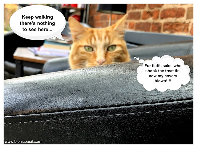 Keep walking there's nothing to see here said Fudge @BionicBasil® on The Pet Parade