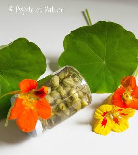 câpres de capucines © Popote et Nature