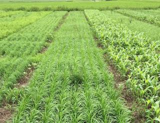 grass-plots