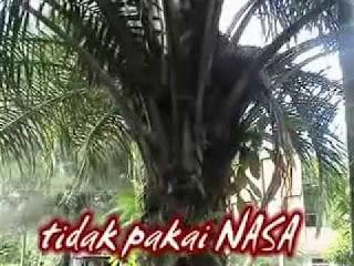 JUAL PESTISIDA ALAMI NASA UNTUK SAWIT DI KABUPATEN LAMANDAU - TELF 082334020868