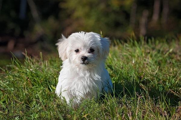 köpek maması