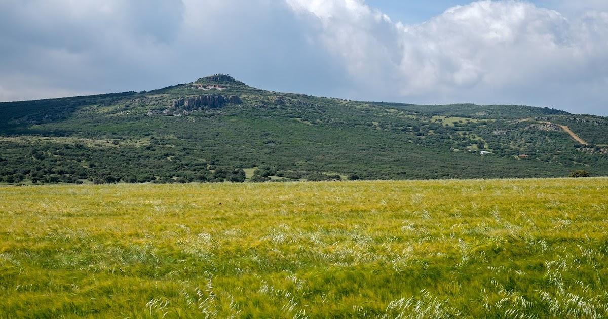 la hierba del rey: