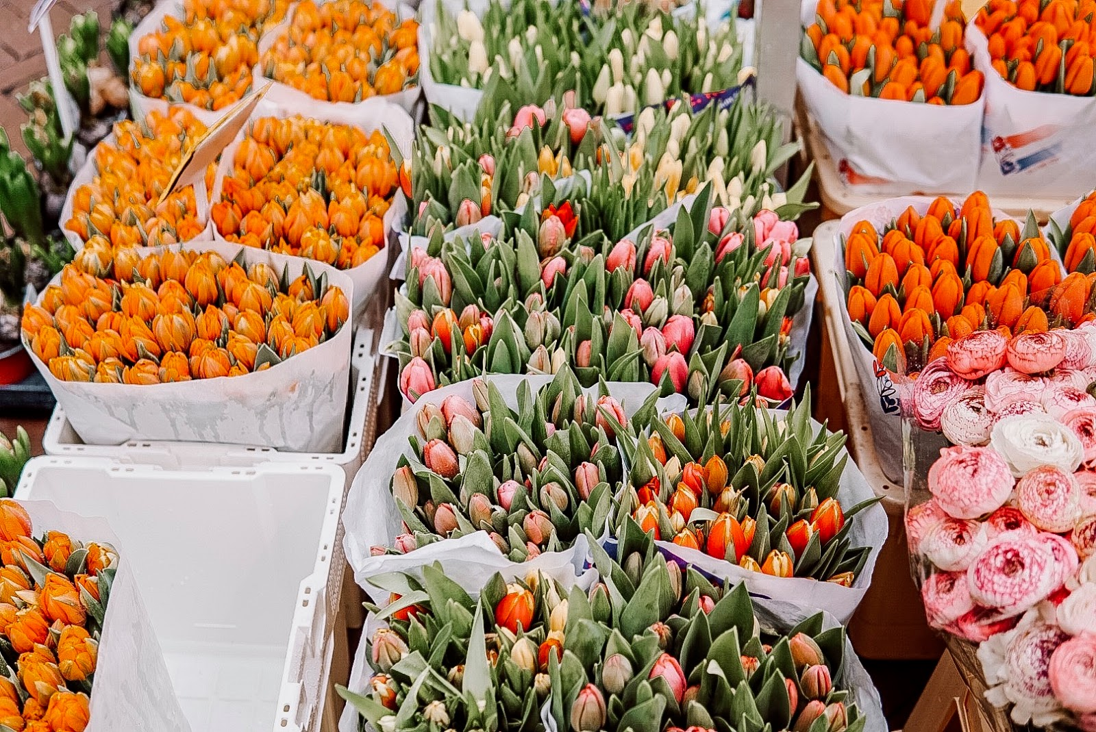colorful tulips at the market in amsterdam.
