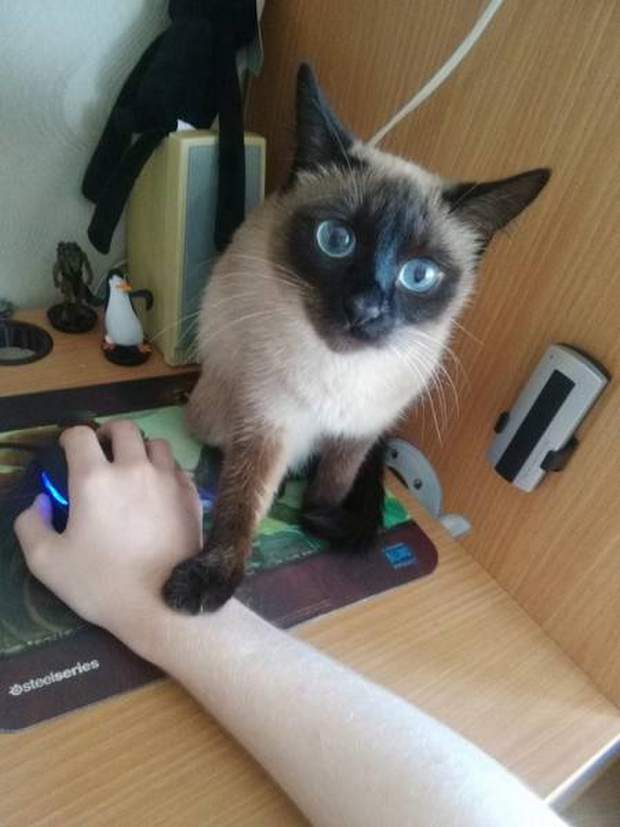 Funny cats - part 222, best funny cat pictures, cat photos, cute cats