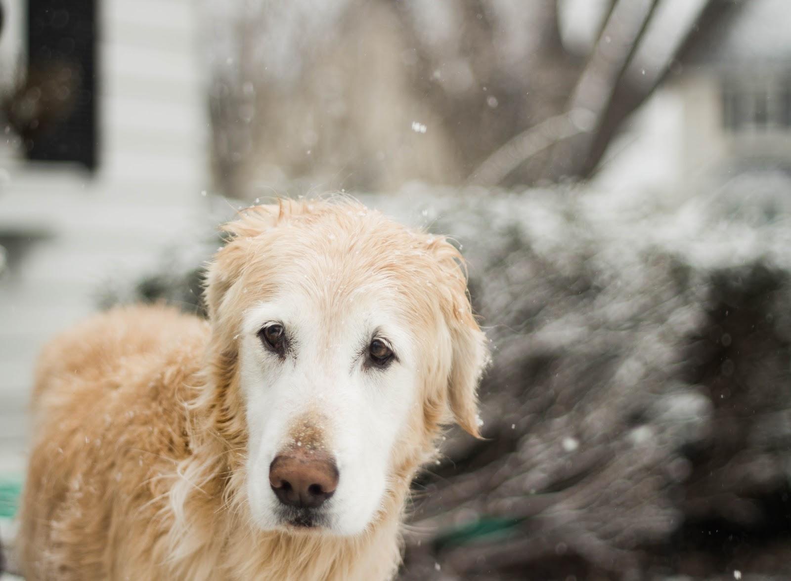 小雪の中に静かに佇む犬