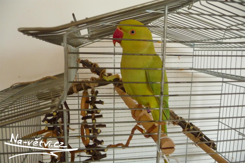 hračka pro papouška