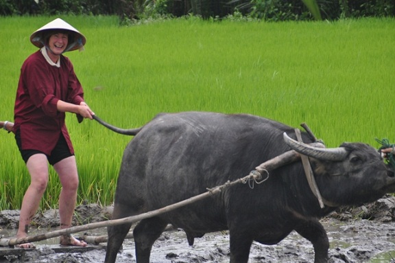 Agricultural tourism: foreign tourists prefer buffalo riding, self-cultivation of vegetables 3