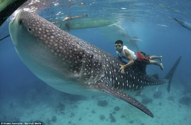 holiday travel philippines swim with whale sharks