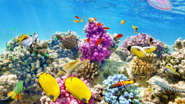 Download-amazing-wallpaper-underwater-world-coral-reef-tropical-fishes-ocean-underwater