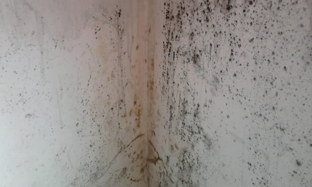 Mi link blog elimina la humedad de tus paredes con este - Humedad en las paredes ...