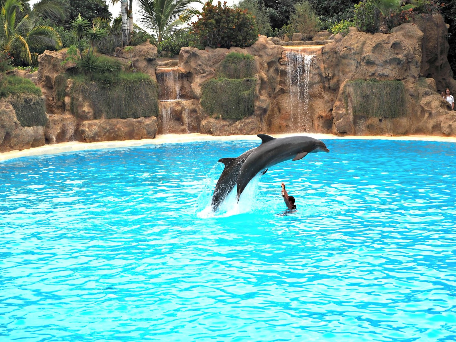 the dolphin cove loro parque tenerife