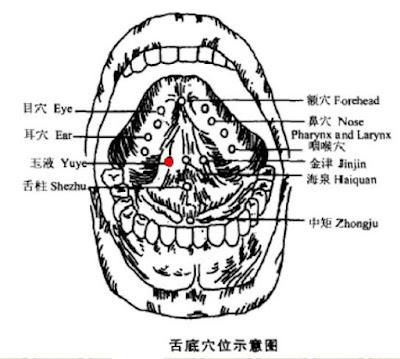 玉液穴位 | 玉液穴痛位置 - 穴道按摩經絡圖解 | Source:zhongyibaike.com