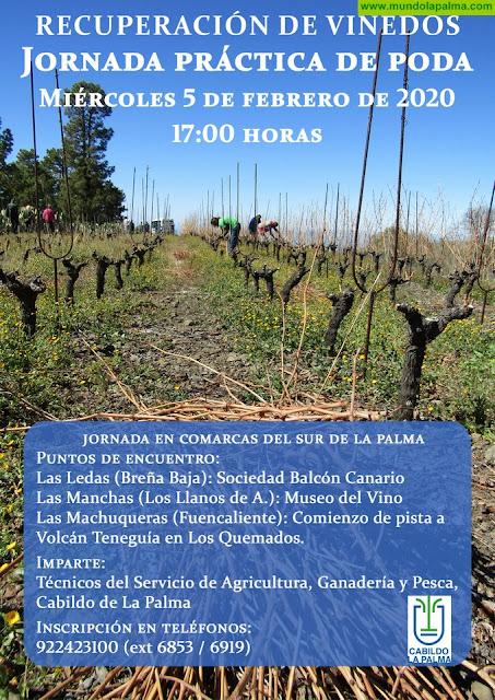 LAS LEDAS: Jornada Práctica de Poda de Viñedos