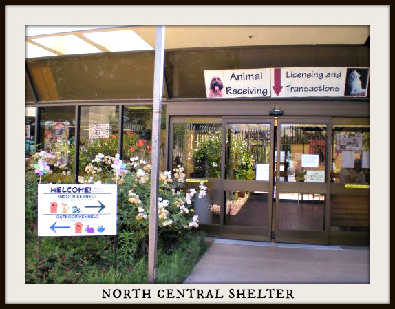 North Central Animal Shelter Los Angeles