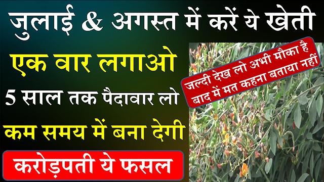 arhar ki kheti,अरहर की फसल,अरहर,दलहनी,खेती,इस प्रकार करें अरहर की वैज्ञानिक खेती,अरहर की फसल से कैसे प्राप्त करें अ