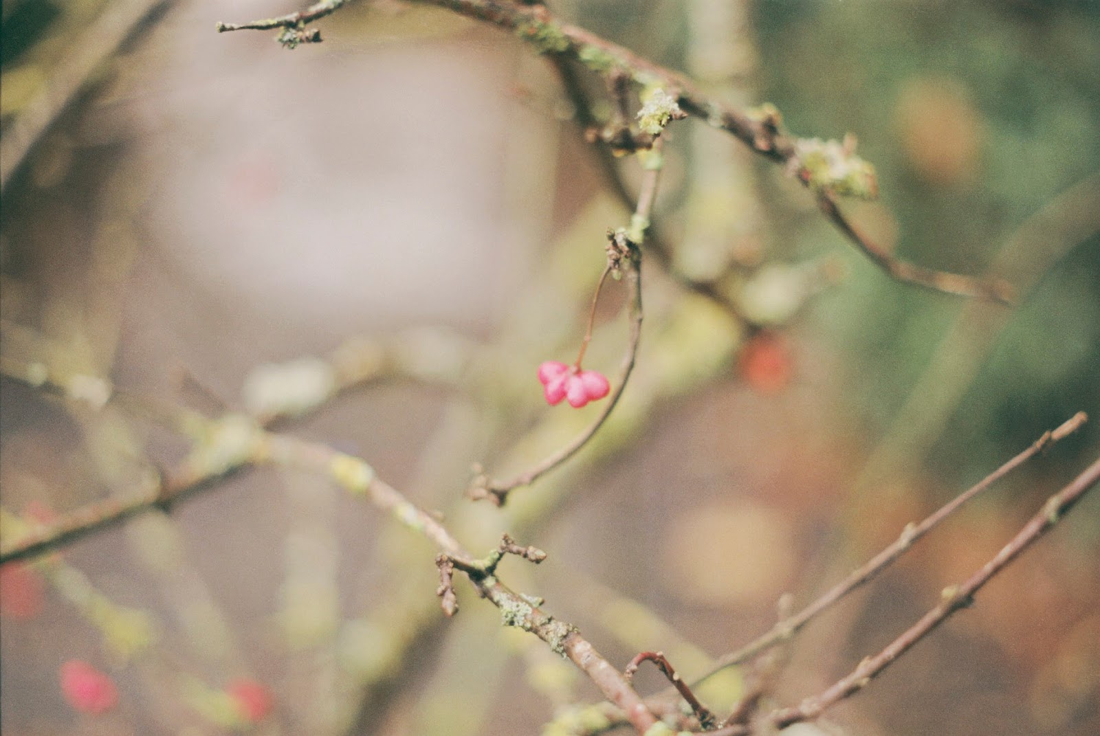 A 35mm photo of a tiny pink flower on the tip of a branch.