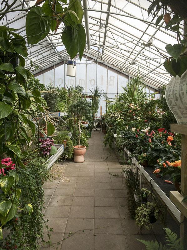 Ösmo Plantshop, växthuset