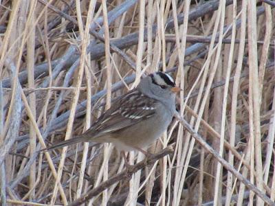 Llano Seco Unit Chico California birding hotspot