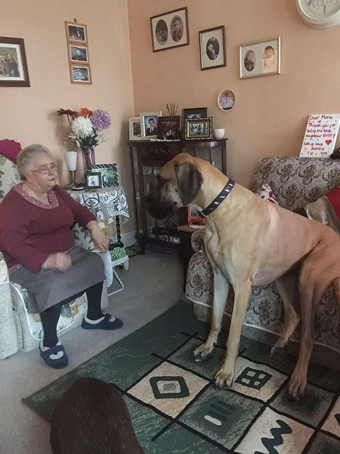 16. My dog ​​loves to listen to my grandmother's stories