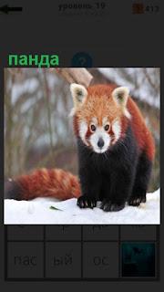 в зимнее время панда ходит по земле