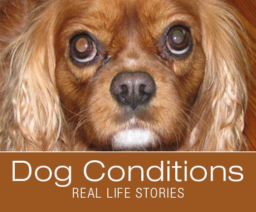 Dog Conditions - Real-Life Stories: Razzle's Immune Mediated Hemolytic Anemia (IMHA)