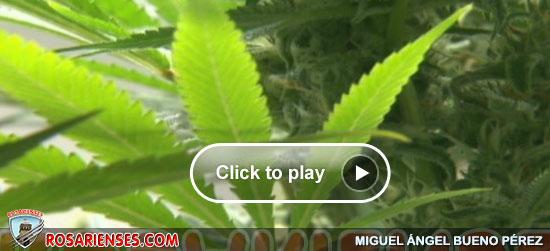 'Increíble, ya no soy un criminal por fumar marihuana', dicen en Seattle | Rosarienses, Villa del Rosario
