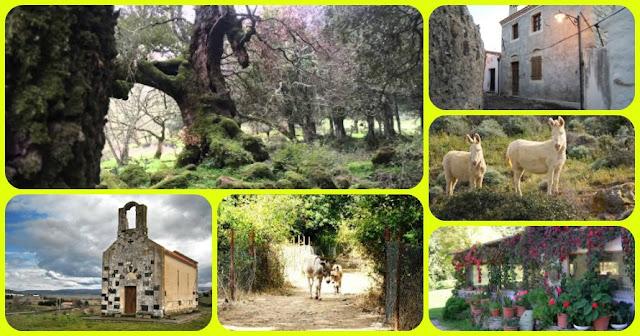 foto Rebeccu, Foresta Burgos e Bonorva con buySardinia