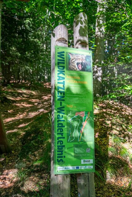 Wildkatzen-Walderlebnis und Wildkatzenstieg zum Wildkatzengehege Bad Harzburg 02