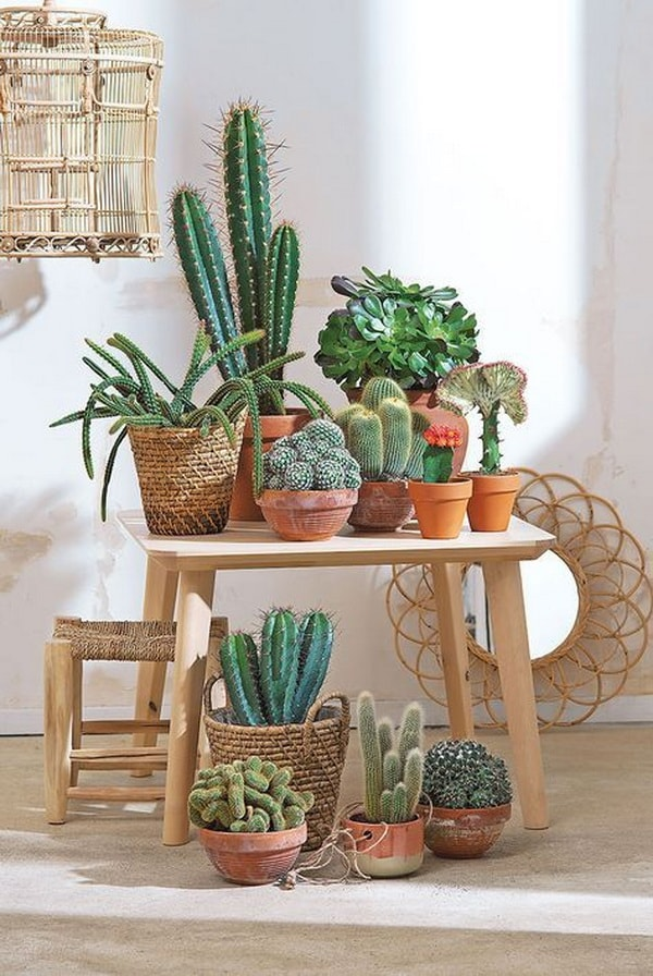Original Ideas For Decorating Interiors With Cactus