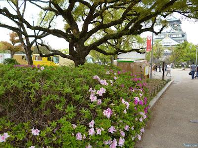 大阪城とツツジ