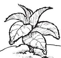 perkembangbiakan tumbuhan lengkap gambar, materi ipa kelas 6 sekolah dasar