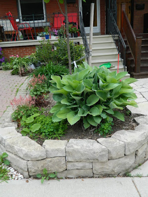 New Wychwood Toronto front garden perennial bed Before by Paul Jung Gardening Services--a Toronto Gardening Company