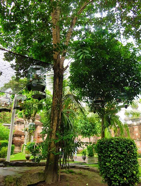 Pohon Mentaok