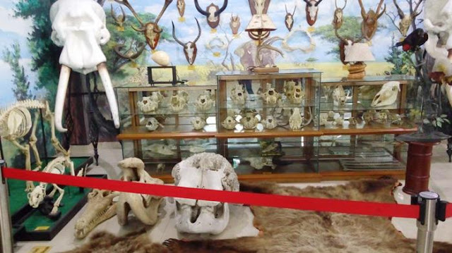 Koleksi Museum Rahmat Internasional Wildlife