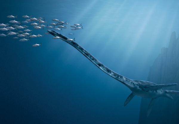 """Thalassomedon, spesies pliosaurus yang dinamai yang berarti """"dewa laut"""""""