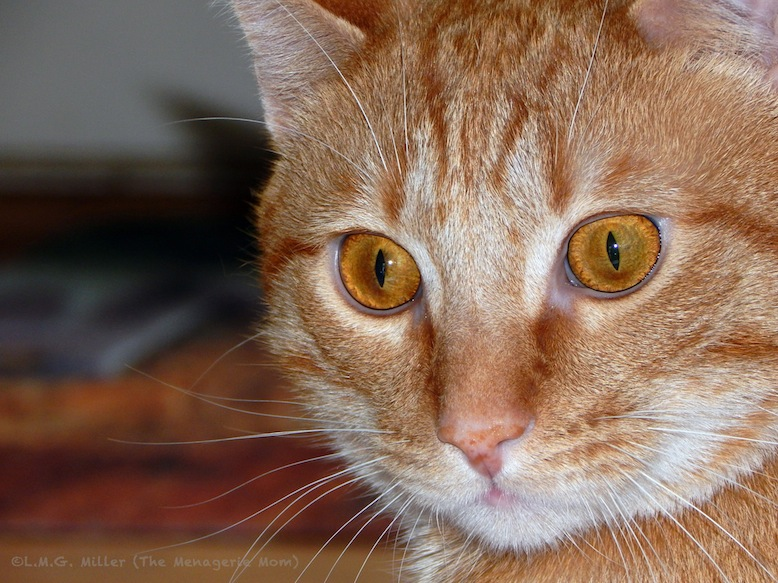 Evan, the cat paralyzed by a coyote attack, gets adopted