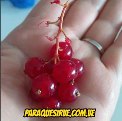 salsa parrilla planta medicinal, Zarzaparrilla, Como Tomar La Zarzaparrilla Para Limpiar La Sangre