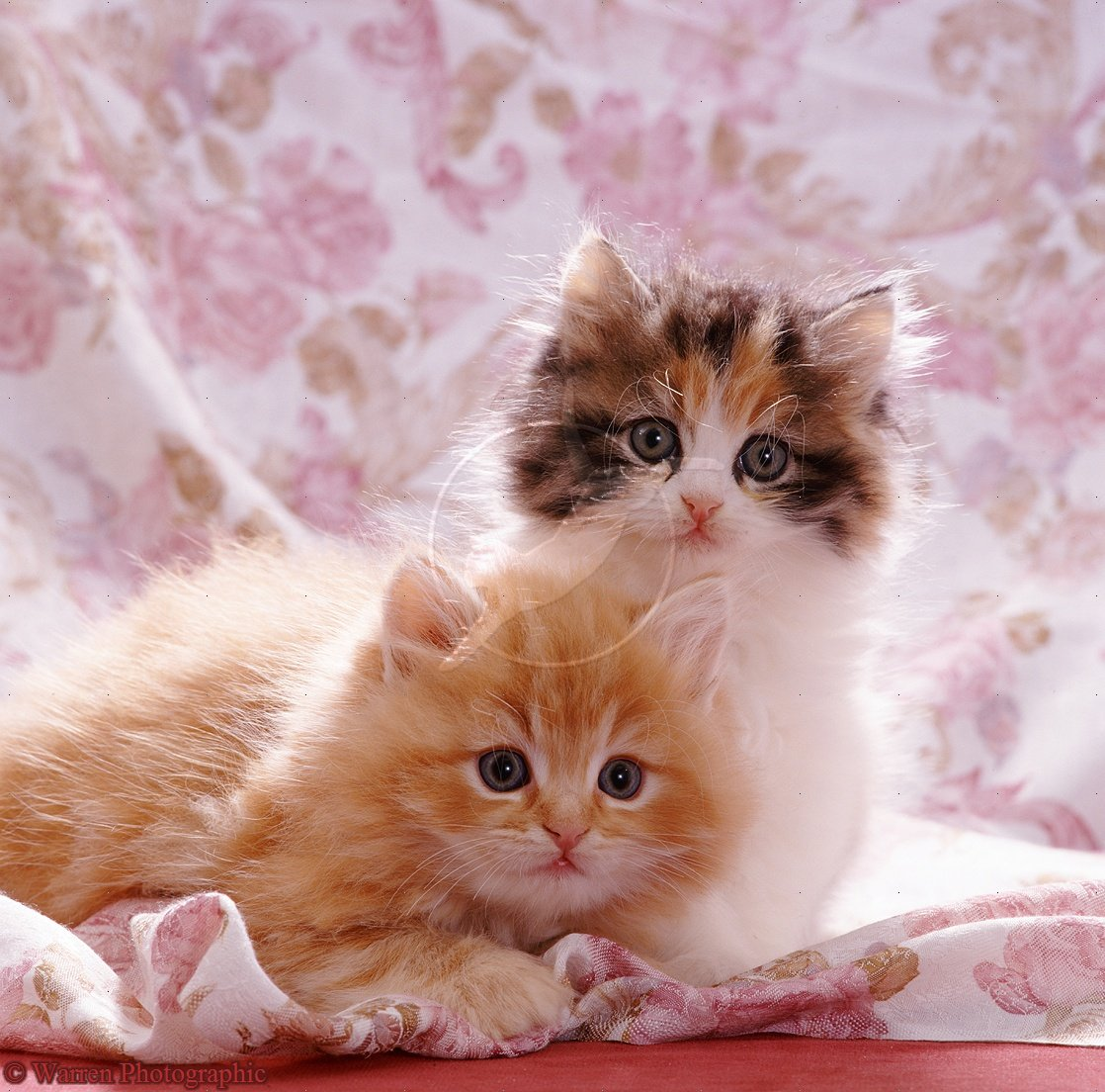 Pets: Cute Cats And Kittens Pictures And Wallpapers
