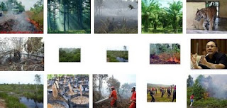 photo gambar kebakaran lahan gambut di Jambi