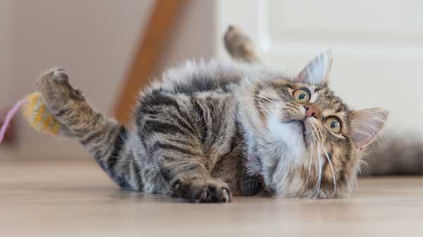 How to tame a destructive cat
