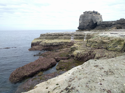 Portland_Bill_Ledges.jpg