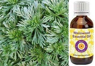 9 Amazing Benefits Of Wormwood Essential Oil