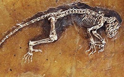 Fosil leluhur harimau dan kucing
