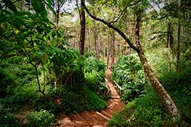 Camp John Hay Eco Trail Baguio City