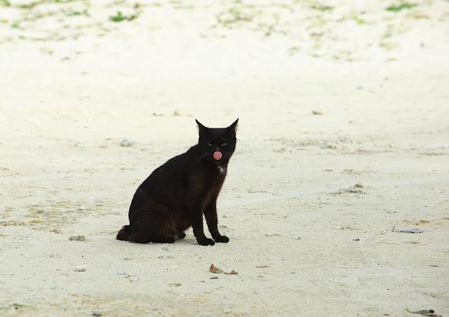 美味しい食事を思い出して舌なめずりしてしまう猫の写真