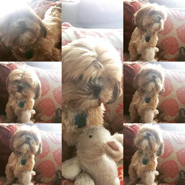 Những nỗi khổ chỉ có dân nuôi chó mới thấu hiểu lòng nhau