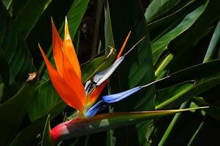 jenis bunga paling berwarna di dunia